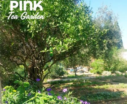 The Pink Tea Garden at Farmer's Deli, Villa Bologna
